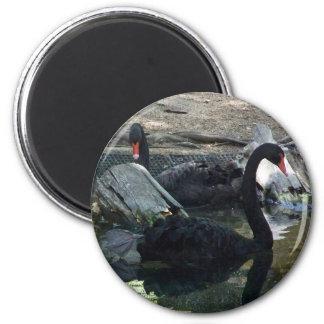 Black Swans 6 Cm Round Magnet