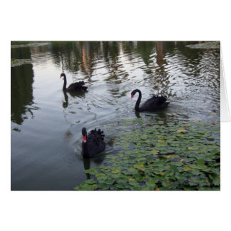 Black Swans Card