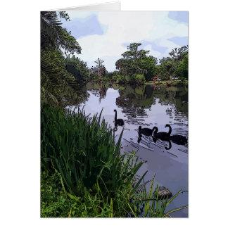 Black Swans in Park Greeting Card