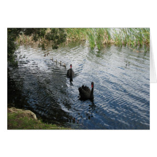 Black Swans, Perth Cards