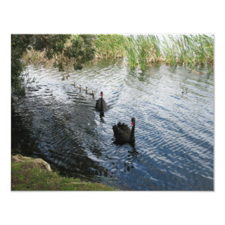 Black Swans, Perth Card