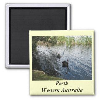 Black Swans, Perth Square Magnet