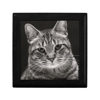 Black Tabby Kitten Gift Box