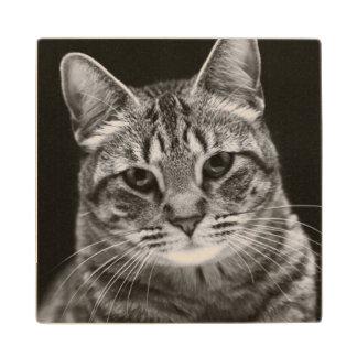 Black Tabby Kitten Wood Coaster