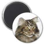 Black Tabby Maine Coon Cat 6 Cm Round Magnet