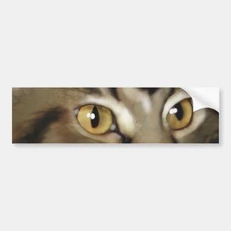 Black Tabby Maine Coon Cat Bumper Sticker