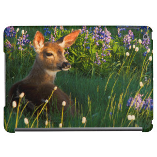 Black-tail Deer Fawn, alpine wildflowers