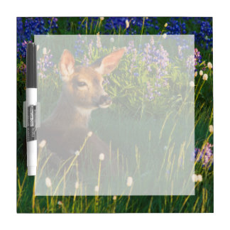 Black-tail Deer Fawn, alpine wildflowers Dry-Erase Board