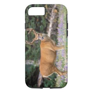 Black-tailed deer, buck eating wildflowers, iPhone 8/7 case