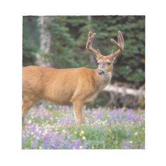 Black-tailed deer, buck eating wildflowers, notepad