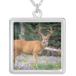 Black-tailed deer, buck eating wildflowers, square pendant necklace