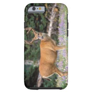 Black-tailed deer, buck eating wildflowers, tough iPhone 6 case