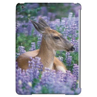 Black-tailed deer, doe resting in siky lupine,
