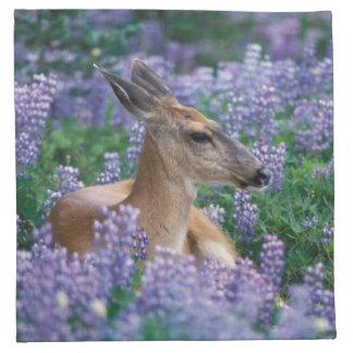 Black-tailed deer, doe resting in siky lupine, napkin