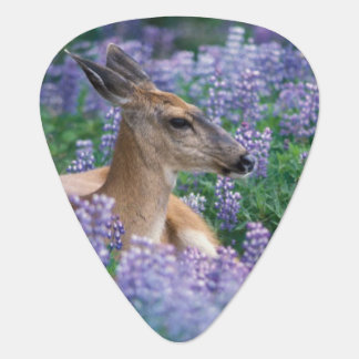 Black-tailed deer, doe resting in siky lupine, plectrum