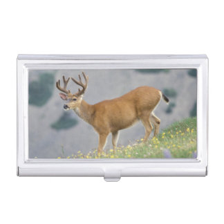 black-tailed deer, Odocoileus hemionus, buck Business Card Cases