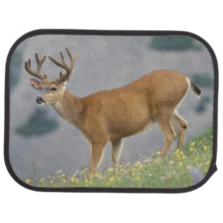 black-tailed deer, Odocoileus hemionus, buck Car Mat