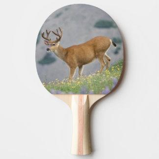 black-tailed deer, Odocoileus hemionus, buck Ping Pong Paddle