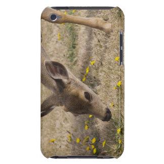 Black-tailed Deer (Odocoileus hemionus) grazing Case-Mate iPod Touch Case