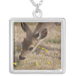 Black-tailed Deer (Odocoileus hemionus) grazing Silver Plated Necklace