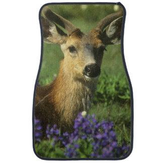 Black-tailed Deer, Odocoileus hemionus), in Car Mat