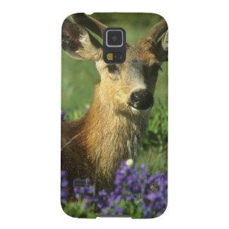 Black-tailed Deer, Odocoileus hemionus), in Case For Galaxy S5