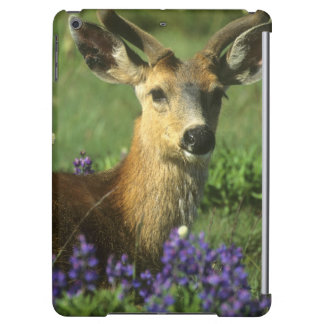 Black-tailed Deer, Odocoileus hemionus), in Cover For iPad Air