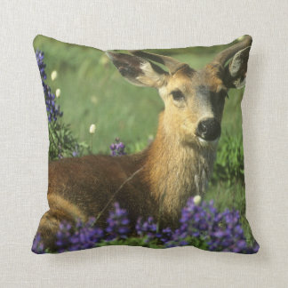 Black-tailed Deer, Odocoileus hemionus), in Cushion