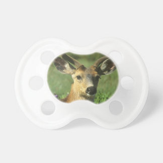 Black-tailed Deer, Odocoileus hemionus), in Dummy