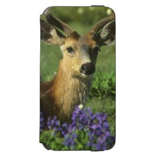 Black-tailed Deer, Odocoileus hemionus), in Incipio Watson™ iPhone 6 Wallet Case