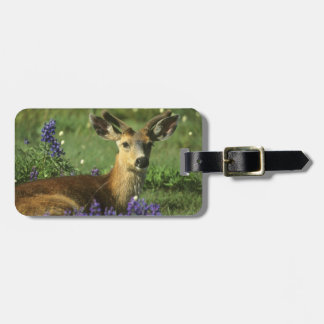 Black-tailed Deer, Odocoileus hemionus), in Luggage Tag