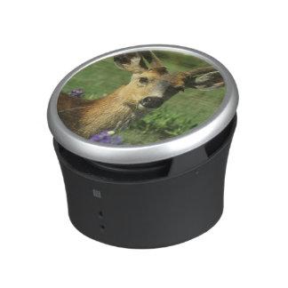 Black-tailed Deer, Odocoileus hemionus), in Bluetooth Speaker