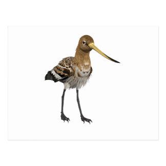Black-Tailed Godwit Post Cards