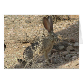 Black-tailed Jackrabbit Card