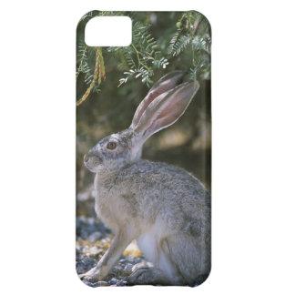 Black-tailed Jackrabbit iPhone 5C Covers