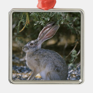 Black-tailed Jackrabbit Silver-Colored Square Decoration