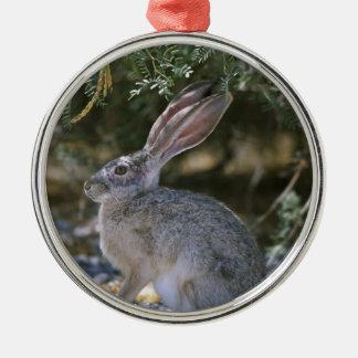 Black-tailed Jackrabbit Christmas Tree Ornament