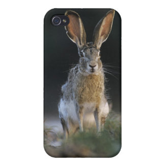 Black-tailed Jackrabbit, Lepus californicus, 2 Case For iPhone 4