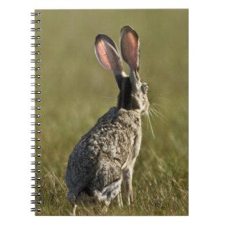 Black-tailed Jackrabbit, Lepus californicus, 2 Notebook