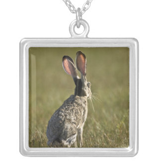 Black-tailed Jackrabbit, Lepus californicus, 2 Silver Plated Necklace