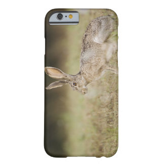 Black-tailed Jackrabbit, Lepus californicus, Barely There iPhone 6 Case