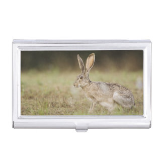 Black-tailed Jackrabbit, Lepus californicus, Business Card Holder