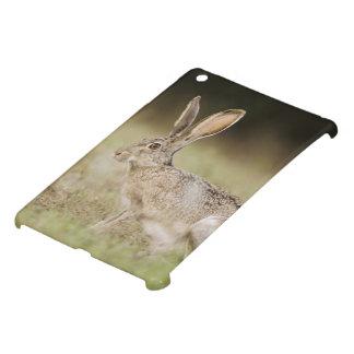 Black-tailed Jackrabbit, Lepus californicus, Cover For The iPad Mini