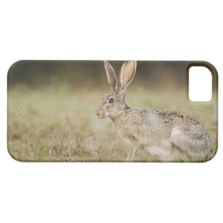 Black-tailed Jackrabbit, Lepus californicus, iPhone 5 Covers