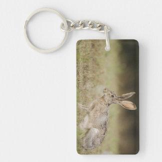 Black-tailed Jackrabbit, Lepus californicus, Key Ring