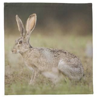 Black-tailed Jackrabbit, Lepus californicus, Napkin