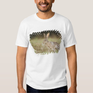 Black-tailed Jackrabbit, Lepus californicus, Shirt