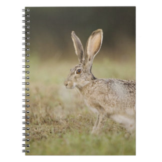 Black-tailed Jackrabbit, Lepus californicus, Spiral Note Book