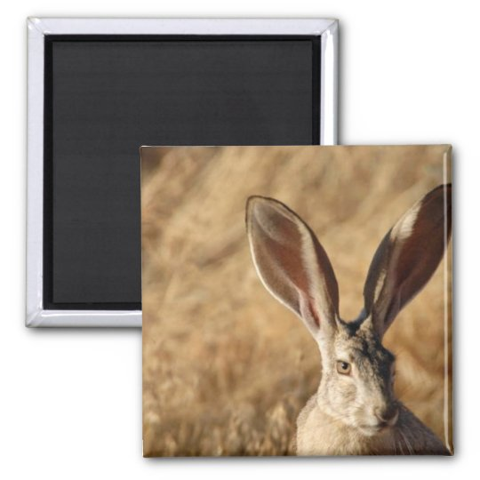 Black-tailed Jackrabbit Magnet