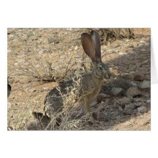 Black-tailed Jackrabbit Note Card